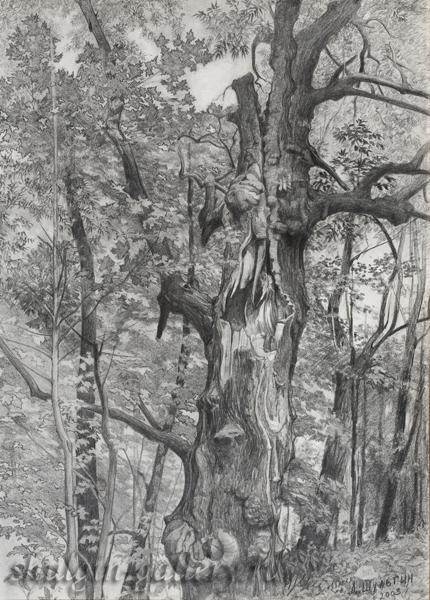 рисунок дерева карандашом: